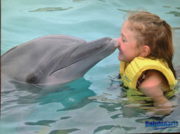 AddisonDolphin